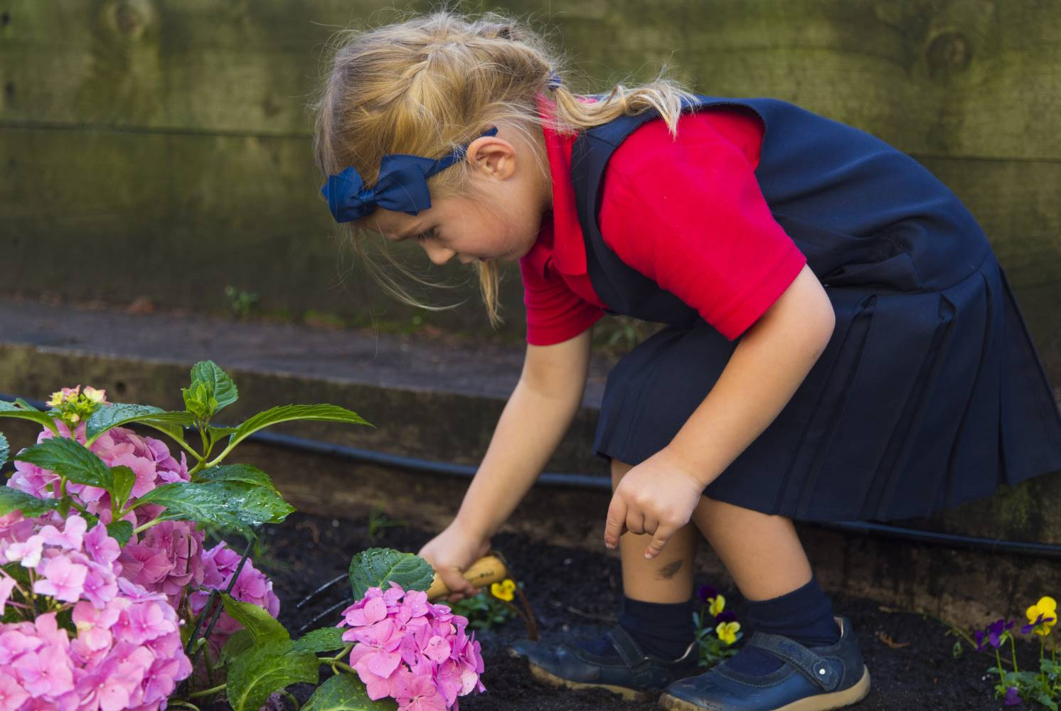 Maple Walk school holds a varierty of after school clubs.  Gardening is popular and teaches children how to care for plants, the life-cycle of plants and gives them physical activity.